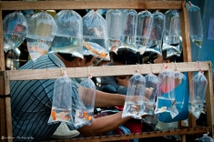 Fish in the plastic (BASH2014)